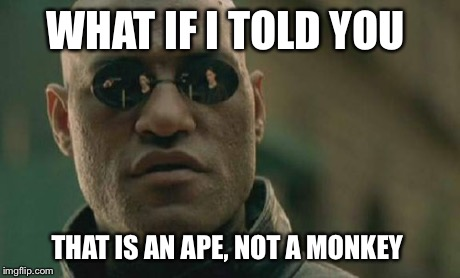 Matrix Morpheus Meme | WHAT IF I TOLD YOU THAT IS AN APE, NOT A MONKEY | image tagged in memes,matrix morpheus | made w/ Imgflip meme maker