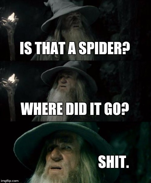 Confused Gandalf Meme | IS THAT A SPIDER? WHERE DID IT GO? SHIT. | image tagged in memes,confused gandalf | made w/ Imgflip meme maker