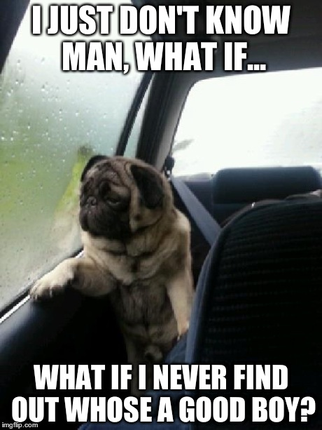 Introspective Pug | I JUST DON'T KNOW MAN, WHAT IF... WHAT IF I NEVER FIND OUT WHOSE A GOOD BOY? | image tagged in introspective pug | made w/ Imgflip meme maker