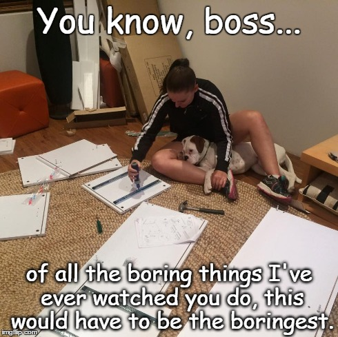 Boring | You know, boss... of all the boring things I've ever watched you do, this would have to be the boringest. | image tagged in dogs,dog,funny,memes | made w/ Imgflip meme maker