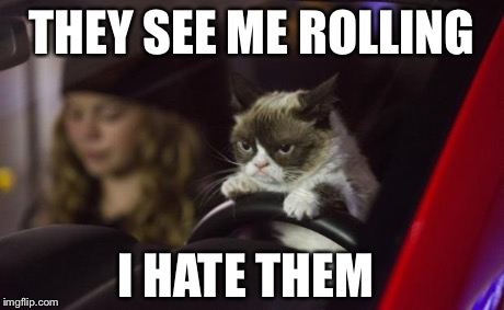 Grumpy Cat Driving | THEY SEE ME ROLLING I HATE THEM | image tagged in grumpy cat driving,grumpy cat | made w/ Imgflip meme maker