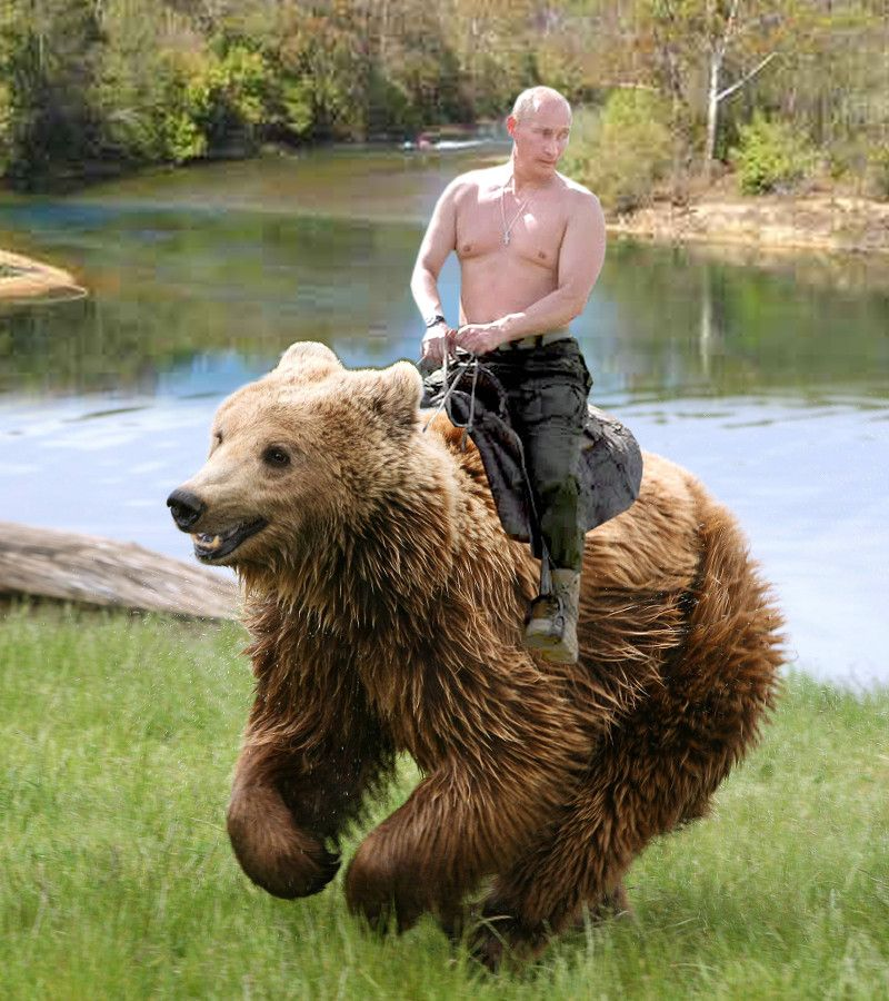 putin shirtless ride bear Blank Meme Template