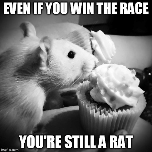 cupcake moocher | EVEN IF YOU WIN THE RACE YOU'RE STILL A RAT | image tagged in pet,rat,rat race,cupcake,cute,adorable | made w/ Imgflip meme maker