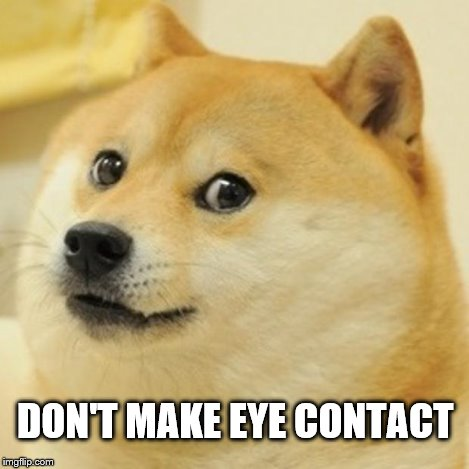 Doge Meme | DON'T MAKE EYE CONTACT | image tagged in memes,doge | made w/ Imgflip meme maker