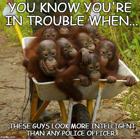 More intelligent than the police | YOU KNOW YOU'RE IN TROUBLE WHEN... ...THESE GUYS LOOK MORE INTELLIGENT THAN ANY POLICE OFFICER. | image tagged in orangutan,ape,cop,police,ftp,stupid | made w/ Imgflip meme maker