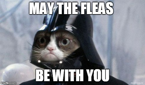 Grumpy Cat Star Wars | MAY THE FLEAS BE WITH YOU | image tagged in memes,grumpy cat star wars,grumpy cat | made w/ Imgflip meme maker