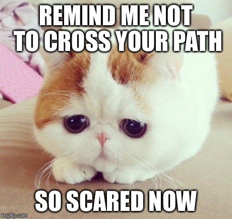sad cat 2 | REMIND ME NOT TO CROSS YOUR PATH SO SCARED NOW | image tagged in sad cat 2 | made w/ Imgflip meme maker