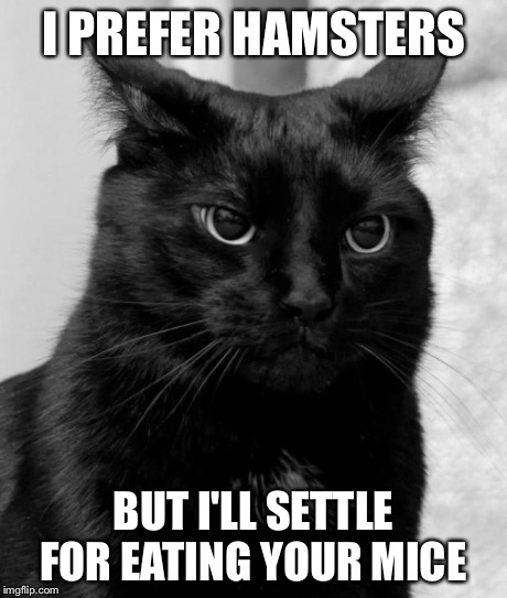 pissed cat | I PREFER HAMSTERS BUT I'LL SETTLE FOR EATING YOUR MICE | image tagged in pissed cat | made w/ Imgflip meme maker