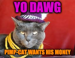 YO DAWG PIMP-CAT WANTS HIS MONEY | made w/ Imgflip meme maker