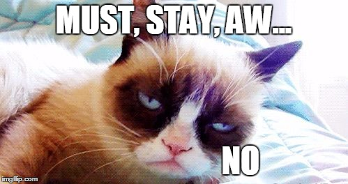 drunk grumpy cat | MUST, STAY, AW... NO | image tagged in drunk grumpy cat | made w/ Imgflip meme maker