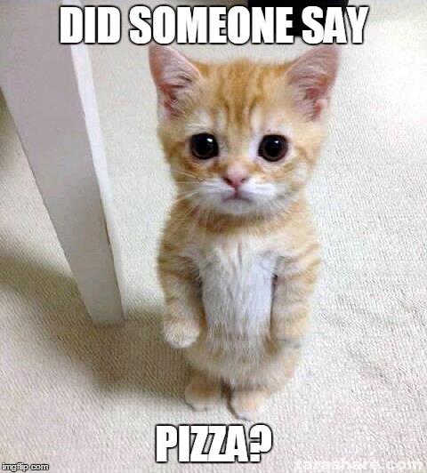 mp7v0 cute cat meme imgflip,Pizza Cat Meme