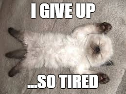 mrpyu image tagged in so tired,tired,tired cat,give up,giving up,memes