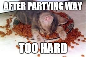 Funny Drunk Meme Pictures : Image tagged in memes drunk drunk cat party party hard funny memes