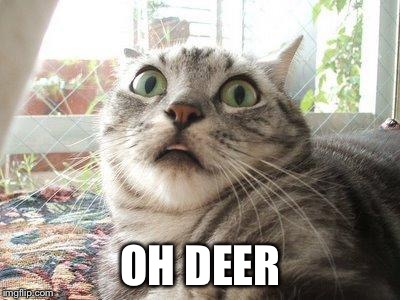 OH DEER | image tagged in shocked cat 2 | made w/ Imgflip meme maker