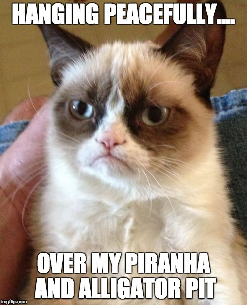 Grumpy Cat Meme | HANGING PEACEFULLY.... OVER MY PIRANHA AND ALLIGATOR PIT | image tagged in memes,grumpy cat | made w/ Imgflip meme maker
