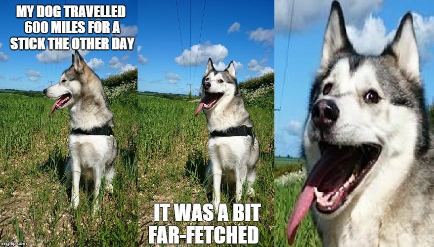 Meme Funny Husky Dogs : Image tagged in husky memes funny memes puns bad pun lol imgflip
