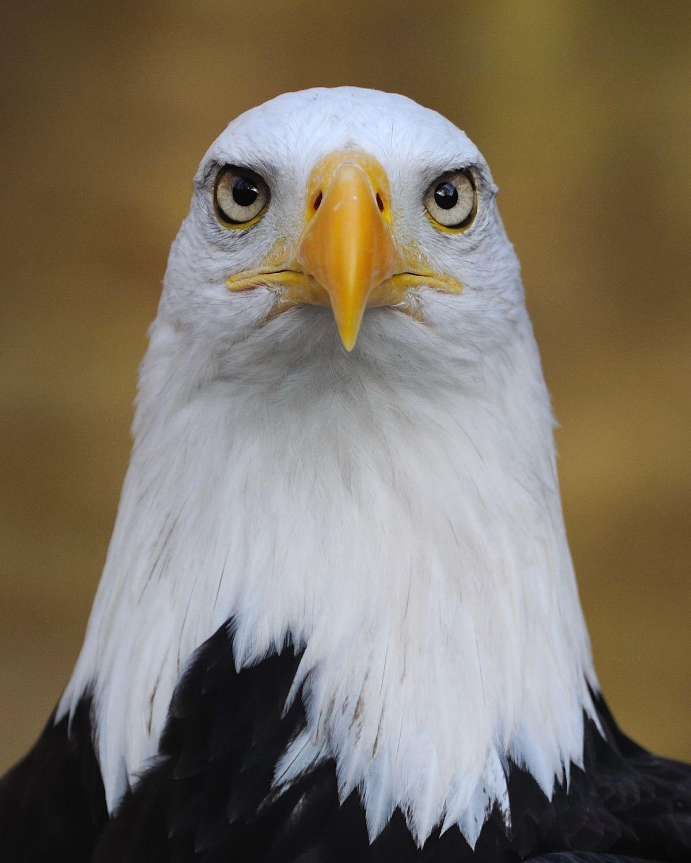 Motivational Eagle Meme Generator - Imgflip
