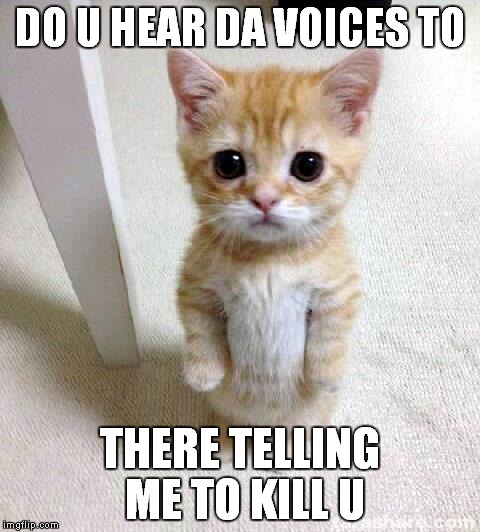 Cute Cat Meme | DO U HEAR DA VOICES TO THERE TELLING ME TO KILL U | image tagged in memes,cute cat | made w/ Imgflip meme maker