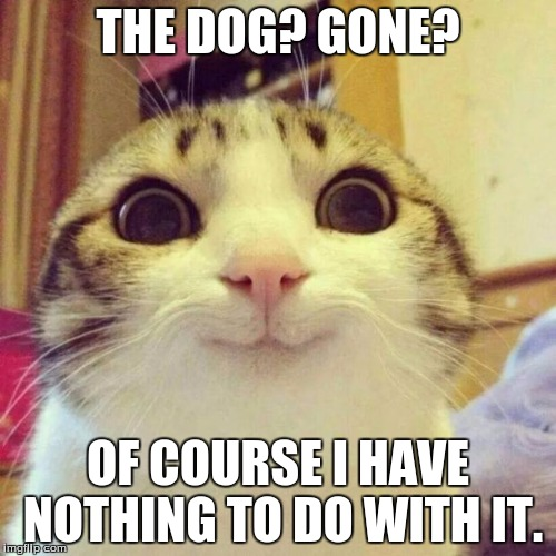 Smiling Cat Meme | THE DOG? GONE? OF COURSE I HAVE NOTHING TO DO WITH IT. | image tagged in memes,smiling cat | made w/ Imgflip meme maker