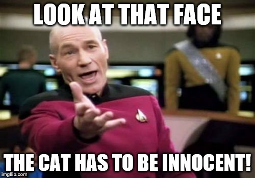 Picard Wtf Meme | LOOK AT THAT FACE THE CAT HAS TO BE INNOCENT! | image tagged in memes,picard wtf | made w/ Imgflip meme maker