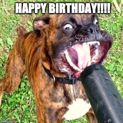 Happy Birthday | HAPPY BIRTHDAY!!!! | image tagged in birthday,happy,happy birthday,dog,dogs | made w/ Imgflip meme maker