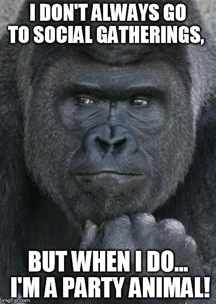 World's Most handsome Gorilla | I DON'T ALWAYS GO TO SOCIAL GATHERINGS, BUT WHEN I DO... I'M A PARTY ANIMAL! | image tagged in handsome gorilla,the most interesting man in the world,gorilla,puns,pun | made w/ Imgflip meme maker