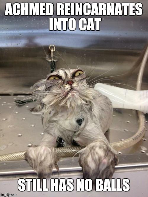 angry cat meme no - photo #22