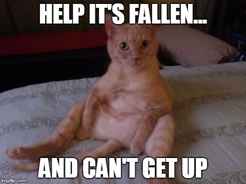 Chester The Cat | HELP IT'S FALLEN... AND CAN'T GET UP | image tagged in memes,chester the cat | made w/ Imgflip meme maker
