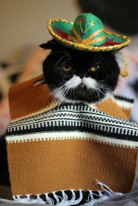 Dont Forget Me Mexican Cat Blank Template Imgflip