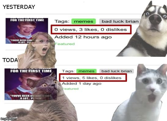 imgflip run by aliens? | . | image tagged in memes,taylor swift,omg cat,dog,surprised cat,imgflip | made w/ Imgflip meme maker