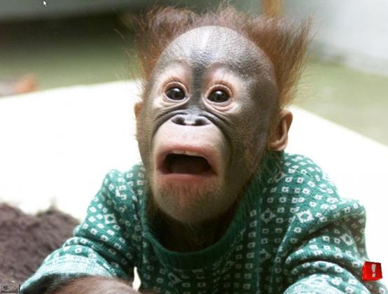 Image result for surprised monkey