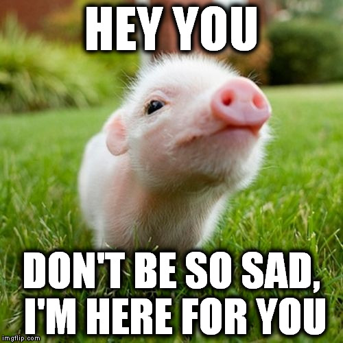 piggy | HEY YOU DON'T BE SO SAD, I'M HERE FOR YOU | image tagged in piggy | made w/ Imgflip meme maker