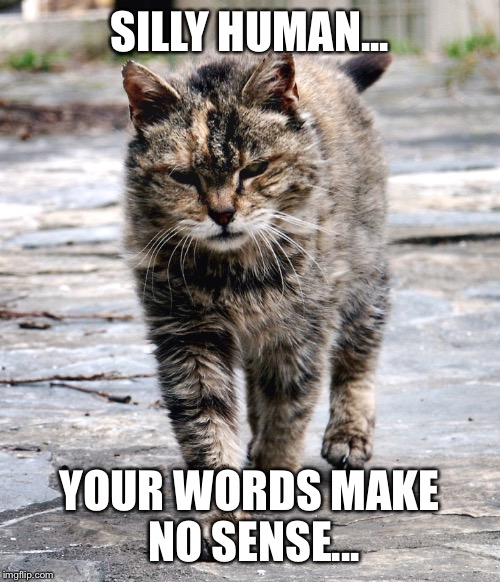 Cat wins | SILLY HUMAN... YOUR WORDS MAKE NO SENSE... | image tagged in cats,sass,burn | made w/ Imgflip meme maker