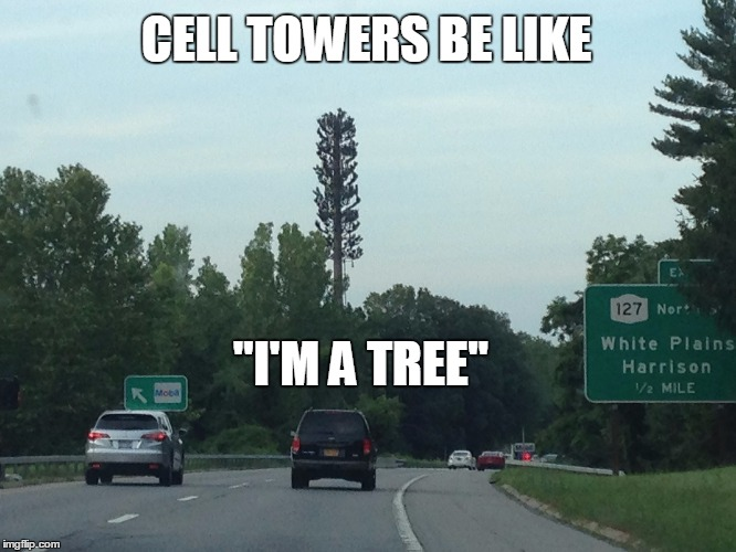 "Cell towers just tryin' to fit in, man.... | CELL TOWERS BE LIKE ""I'M A TREE"" 