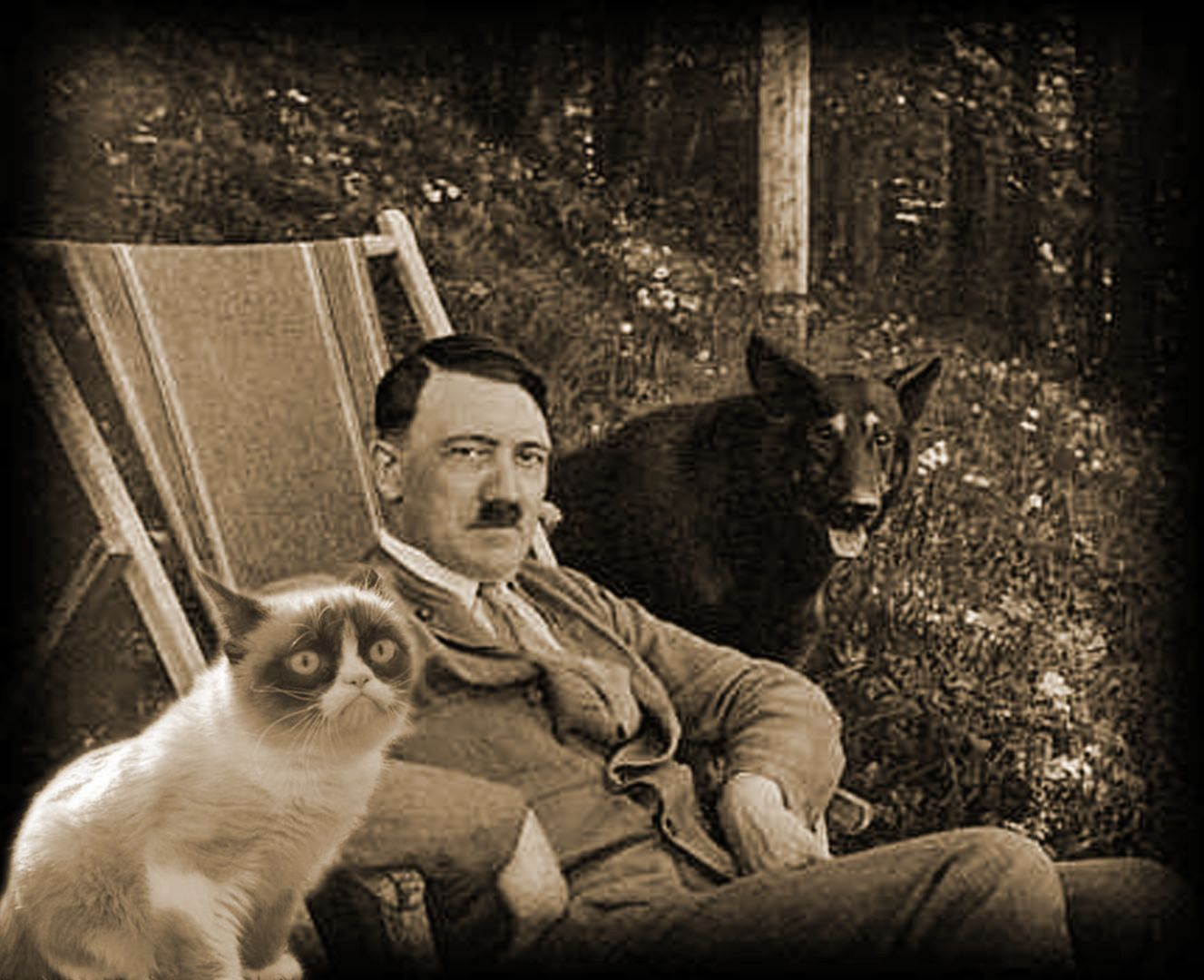 Grumpy Cat With Hitler Blank Template Imgflip