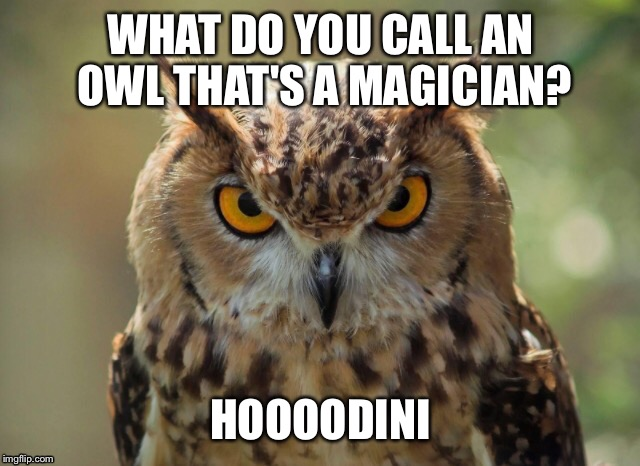 Image Tagged In Owlpuns Imgflip