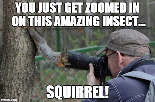 Jehovas Witness Squirrel | YOU JUST GET ZOOMED IN ON THIS AMAZING INSECT... SQUIRREL! | image tagged in memes,jehovas witness squirrel | made w/ Imgflip meme maker