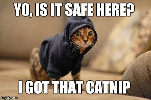 Hoody Cat | YO, IS IT SAFE HERE? I GOT THAT CATNIP | image tagged in memes,hoody cat | made w/ Imgflip meme maker