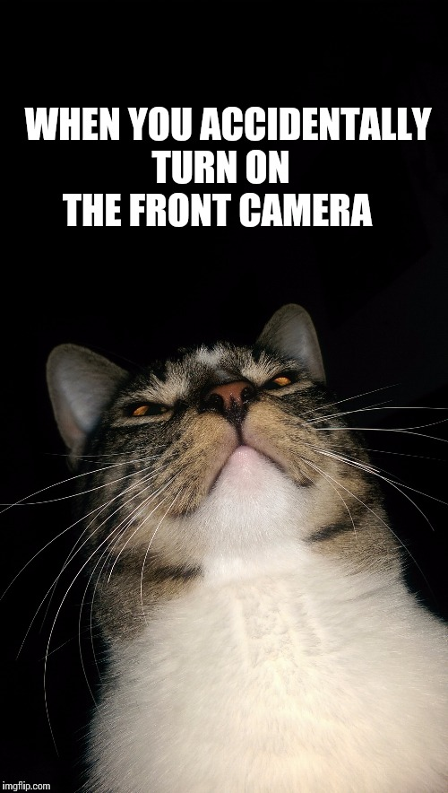 When you accidentally turn on the front camera | WHEN YOU ACCIDENTALLY TURN ON THE FRONT CAMERA | image tagged in cats,funny cat,phones,front camera,when you accidently open the front camera,accident | made w/ Imgflip meme maker