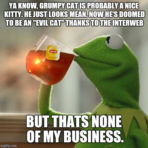 "But That's None Of My Business | YA KNOW, GRUMPY CAT IS PROBABLY A NICE KITTY. HE JUST LOOKS MEAN. NOW HE'S DOOMED TO BE AN ""EVIL CAT"" THANKS TO THE INTERWEB BUT THATS NONE  