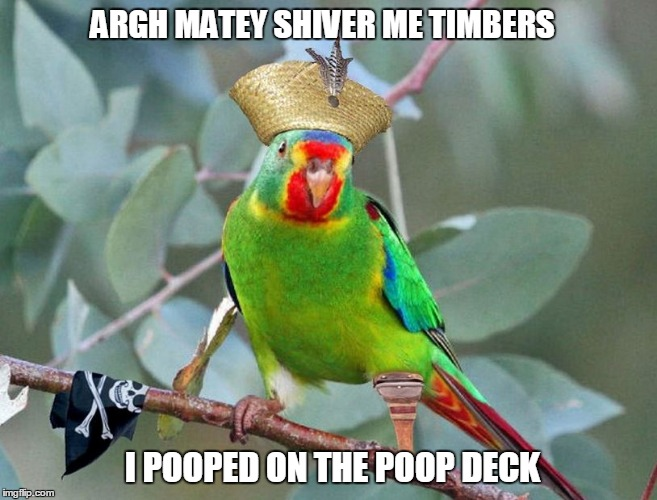 ARGH MATEY SHIVER ME TIMBERS I POOPED ON THE POOP DECK | image tagged in argh matey | made w/ Imgflip meme maker