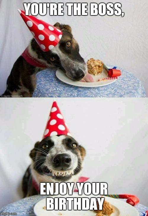 Birthday Cake Dog Meme ~ Happy birthday imgflip