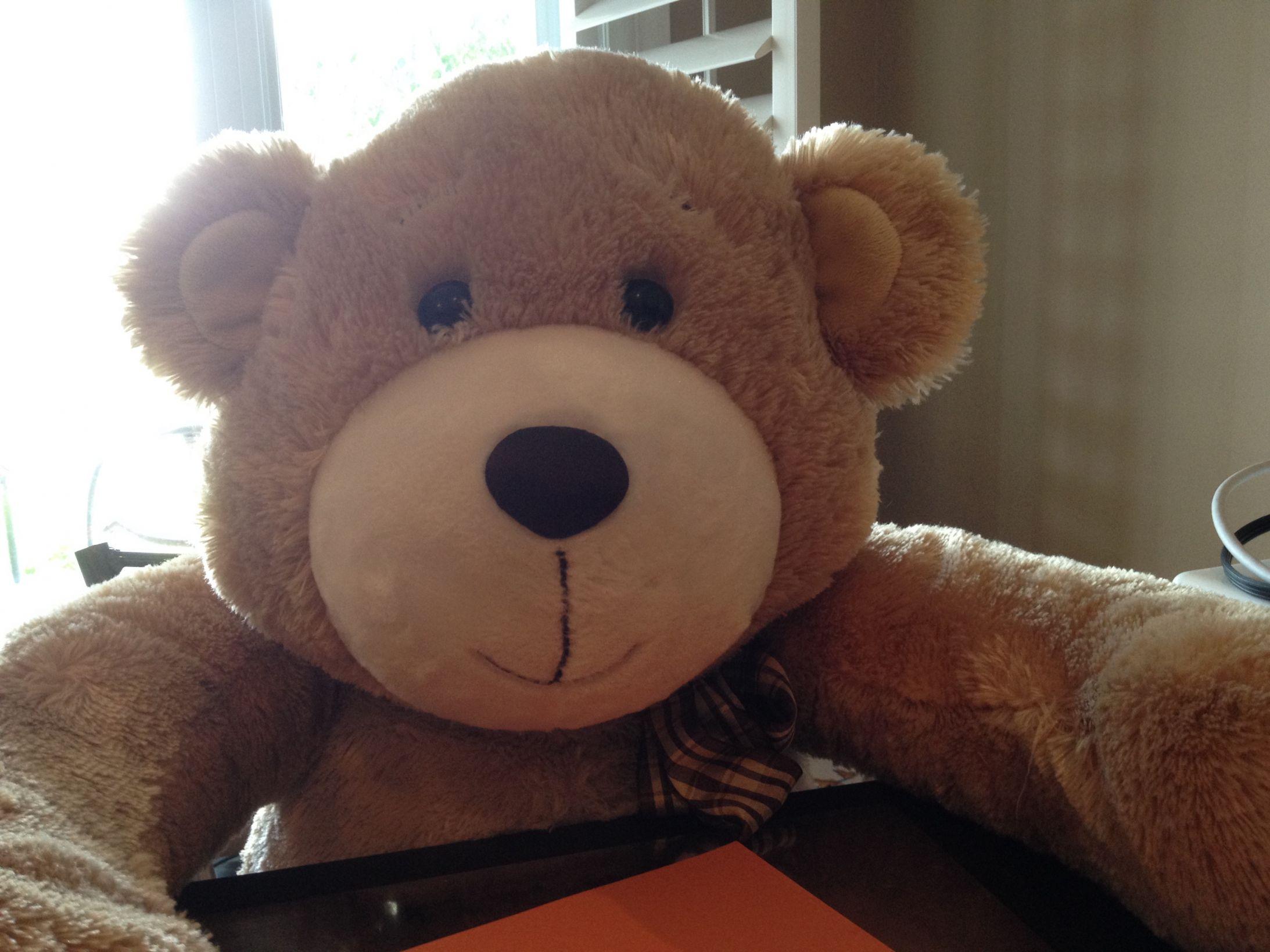 b187060e228 Teddy Bear · Teddy Bear Meme Template