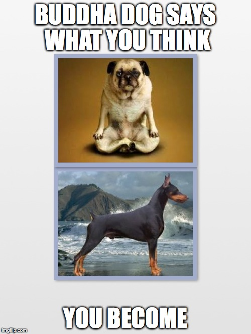 Wise Buddha Pug | BUDDHA DOG SAYS WHAT YOU THINK YOU BECOME | image tagged in buddha,pug,doberman,dog,funny meme,meditate | made w/ Imgflip meme maker