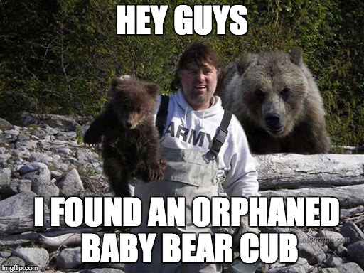 I found an orphan bear cub | HEY GUYS I FOUND AN ORPHANED BABY BEAR CUB | image tagged in i found an orphan bear cub | made w/ Imgflip meme maker