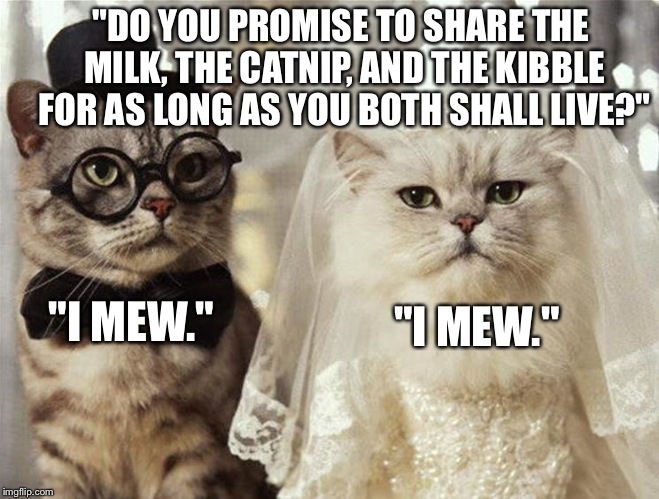 I Don\u0027t Usually Make Cat Memes (Over used), But Here