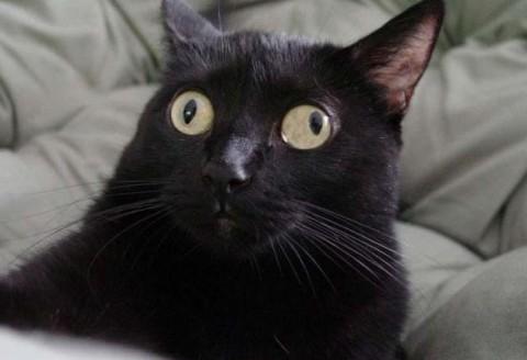 Confused Cat Meme Generator Imgflip
