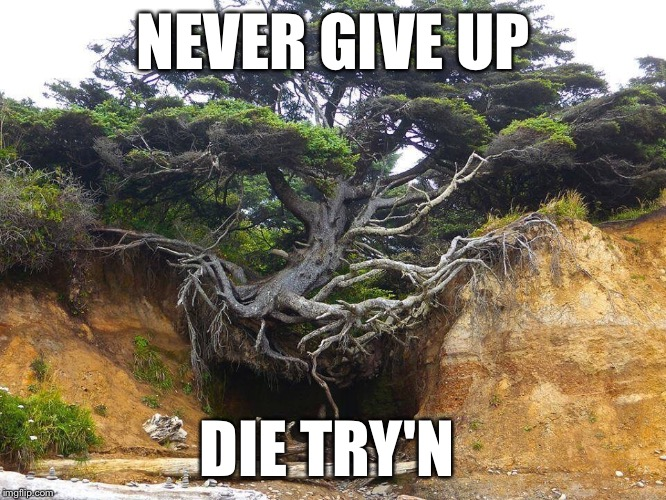 o910c image tagged in never give up imgflip