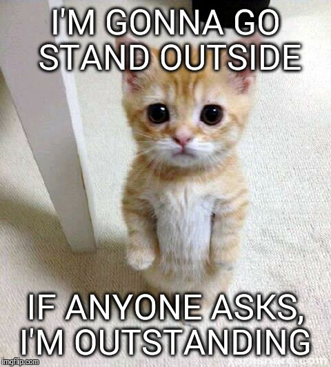 Cat Meme Stand