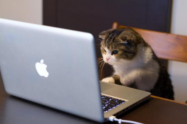Cat using computer Meme Generator - Imgflip